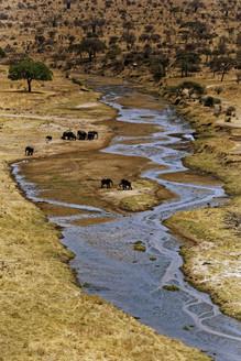 AdrienFavre_éléphant-rivière_Afrique