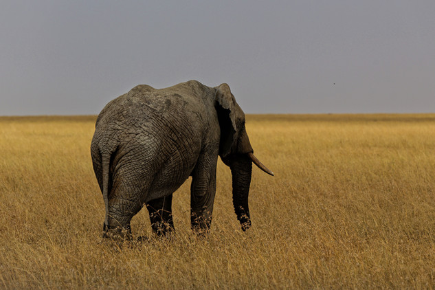 Adrien Favre photography Eléphant