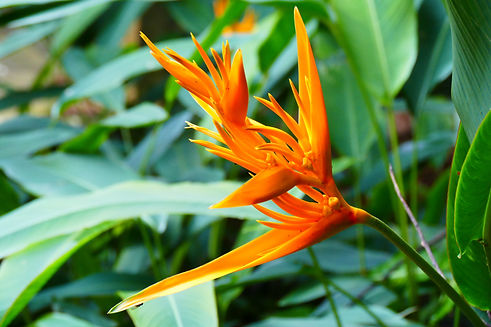 Charming blooming exotic tropical flower