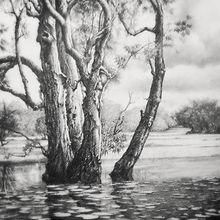 澳洲達爾文–張若瑟畫展
