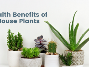 House Plants With Health Benefits