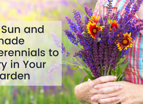 5 Sun and Shade Perennials to Try in Your Garden
