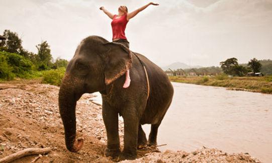 Ride an Elephant.jpeg