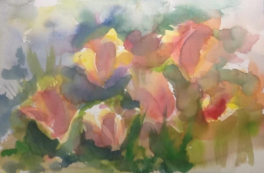 Tulips in Sonoma