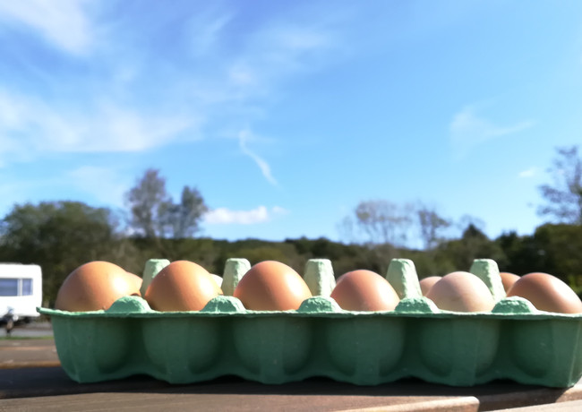 Fresh eggs from Ty Cynan hens_