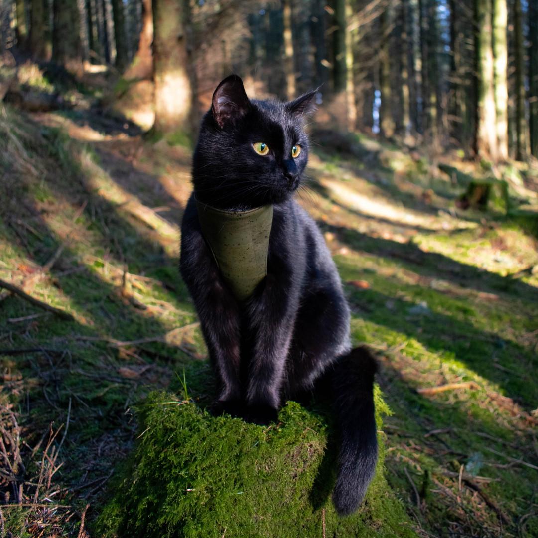 @irish_adventure_kitty