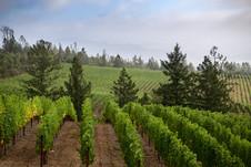 bob-mcclenahan-photography-wine-napa-sonoma-caspar-vineyard.jpg