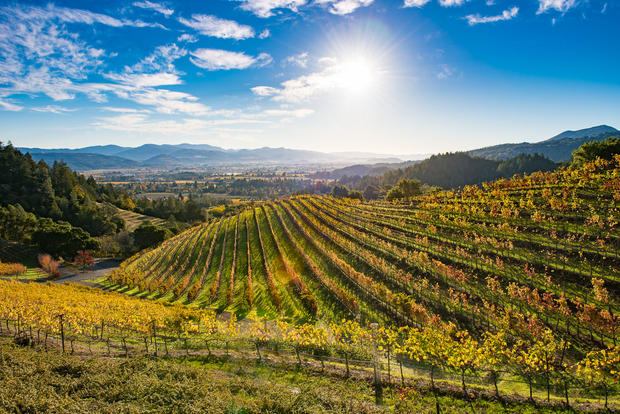 Newton Vineyard in the Fall