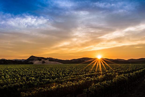 Carneros Sunset