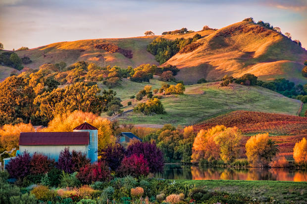Carneros in the Fall