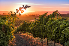 bob-mcclenahan-photography-wine-napa-sonoma-carneros-vineyard.jpg