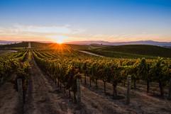 bob-mcclenahan-photography-wine-napa-sonoma-carneros-vineyard.jpg