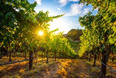 bob-mcclenahan-photography-wine-napa-sonoma-calistoga-vineyard.jpg