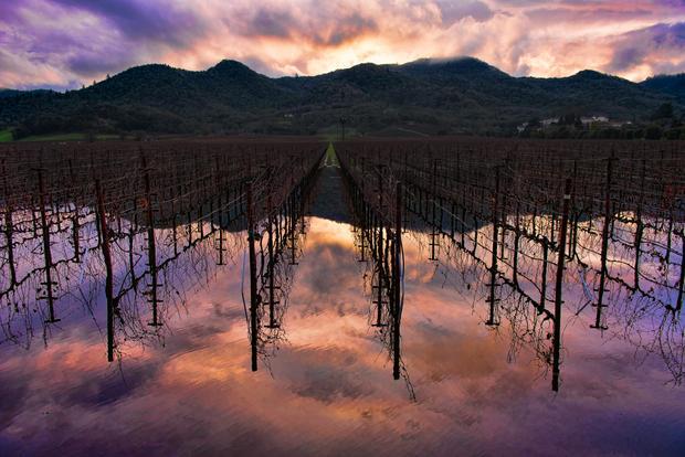 Flooded Oak Knoll Vineyard