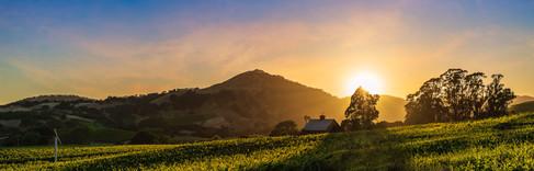 bob-mcclenahan-photography-wine-napa-sonoma-vineyard.jpg