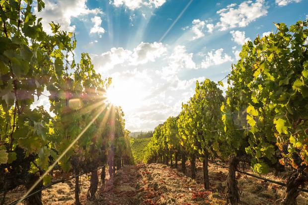 Conn Valley Vineyard