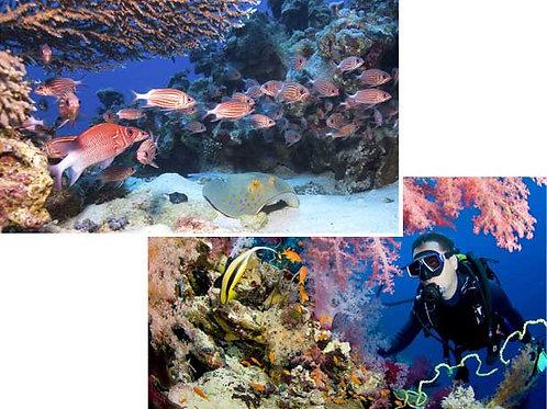 Undersea Backdrops - large