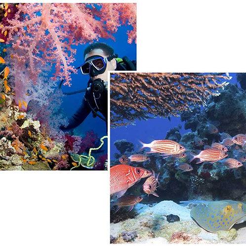 Undersea Backdrops - small