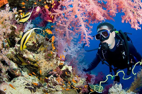 Diver in Coral Bespoke Backdrop