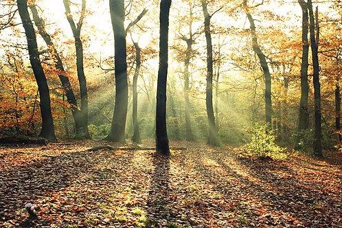 Woodland Trees Bespoke Backdrop