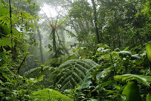 Jungle Bespoke Backdrop