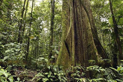 Rain Forest Bespoke Backdrop