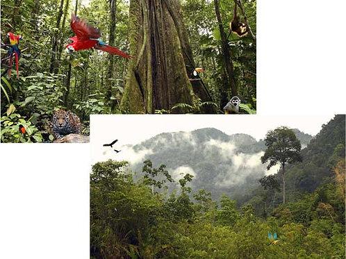 Jungle Backdrops - large