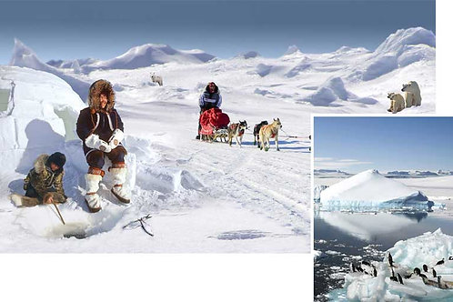 Polar Scene Setter - medium