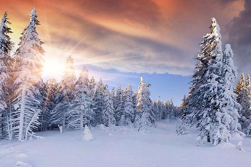 Snowy Winter Scene 2 Bespoke Backdrop