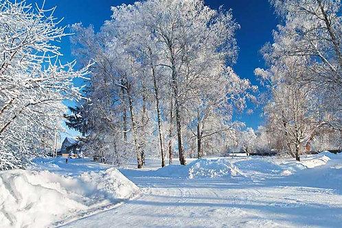 Snowy Winter Scene 1 Bespoke Backdrop