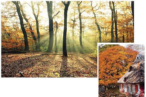 Woodland Scene Setter - medium