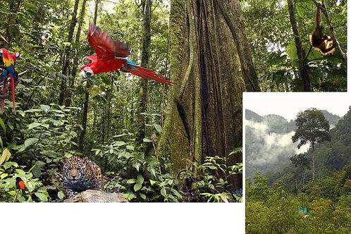 Jungle Scene Setters - medium
