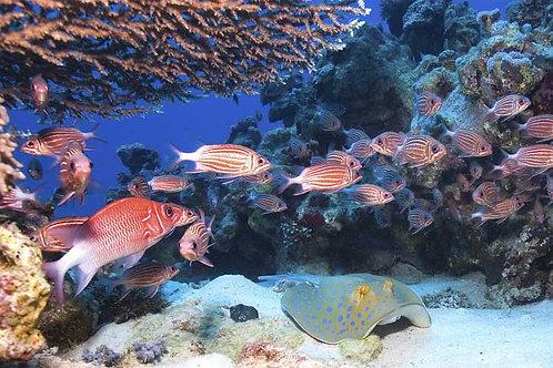 Undersea Coral Reef Bespoke Backdrop