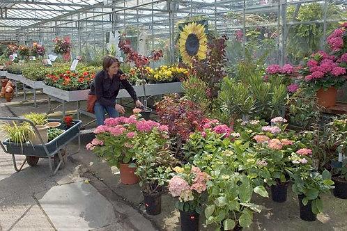 Garden Centre Selecting Bespoke Backdrop