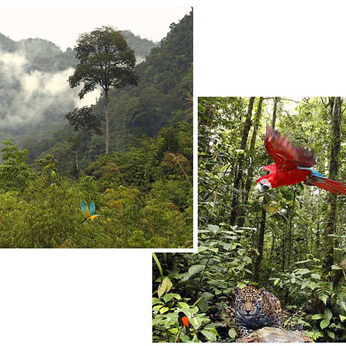 Jungle Backdrops - small