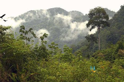 Rain Forest Canopy Bespoke Backdrop
