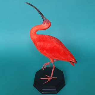 Rode-ibis.jpg