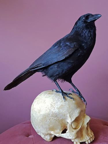 crow01.jpg