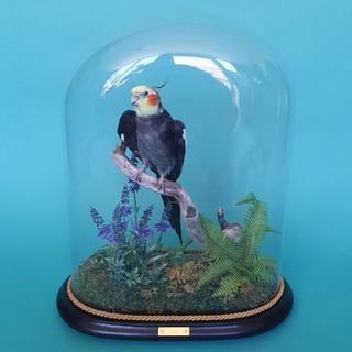 Petbird-Kiwi.jpg