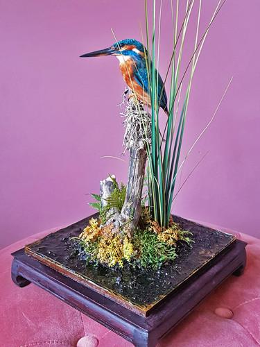 kingfisher01.jpg