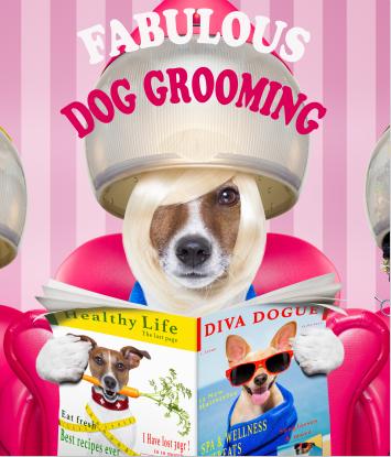 fabulous dog grooming