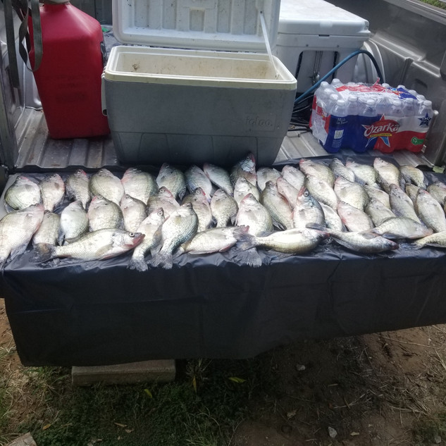 Dozens of caught fish on a truck