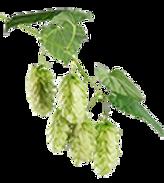 ohpr_lp-hops-on-the-vine.png