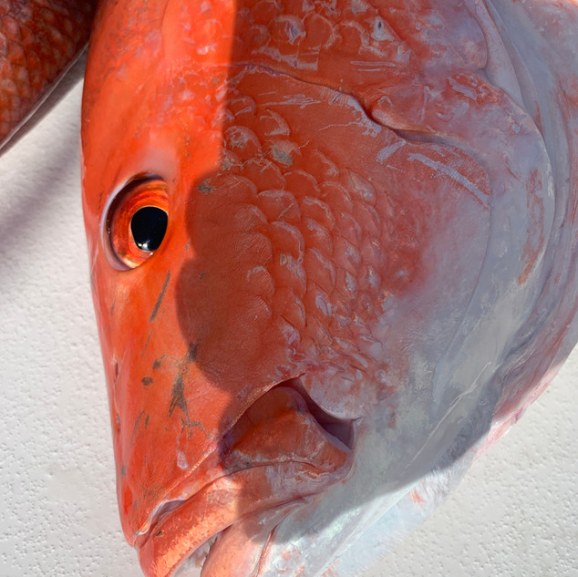 red fish laying on boat