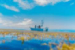 Fishing boat Sargassum