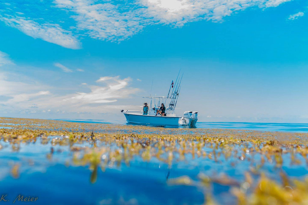 Fishing boat Sargassum