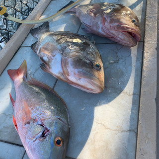 3 fish laying on a boat