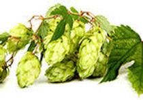 ohpr_lp-hops-cones-150x105.jpg