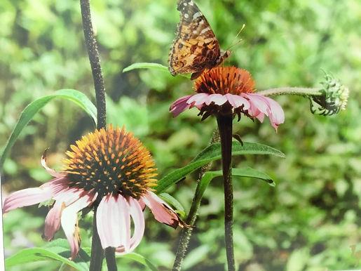 Dawn Bevers Bee Art