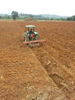 STARTING ROWS FOR CULTIVATION